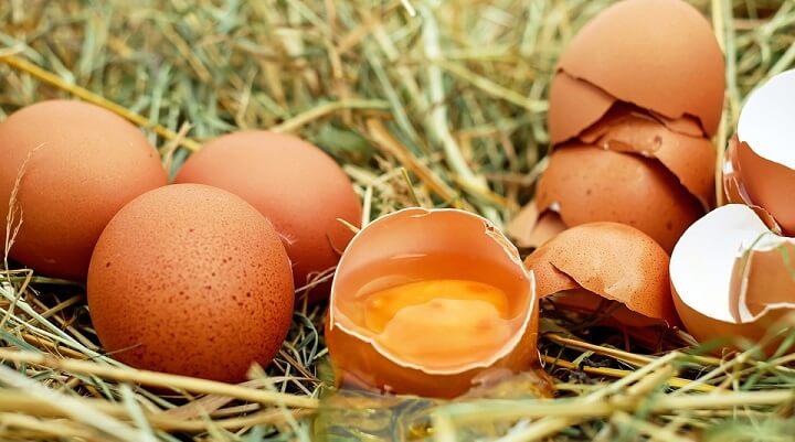 Produção de Ovos: Passos Simples para ter Sucesso na Produção